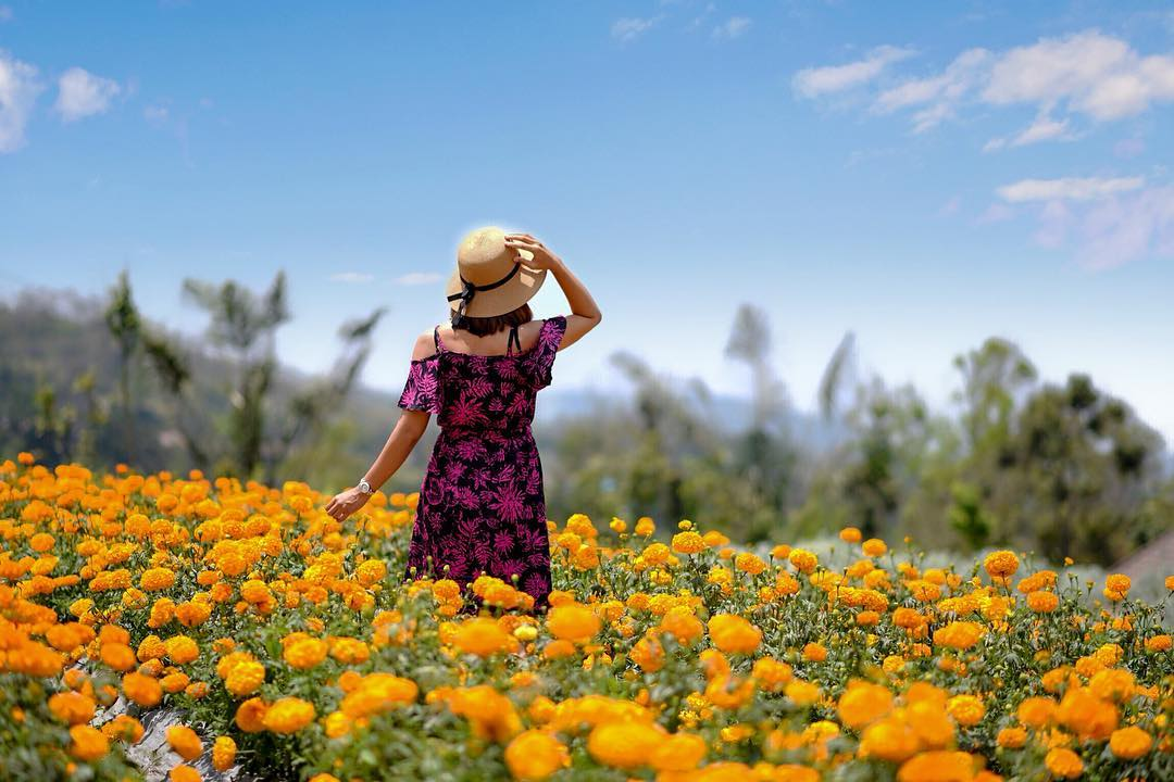 Petang Marigold Field, the Flowery Heaven in Bali - deskgram.netPetang Marigold Field, the Flowery Heaven in Bali - deskgram.net