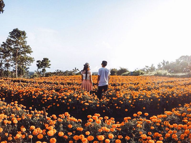 Things to Do at Petang Marigold Field - Petang Marigold Field, the Flowery Heaven in Bali - ithaka.trave